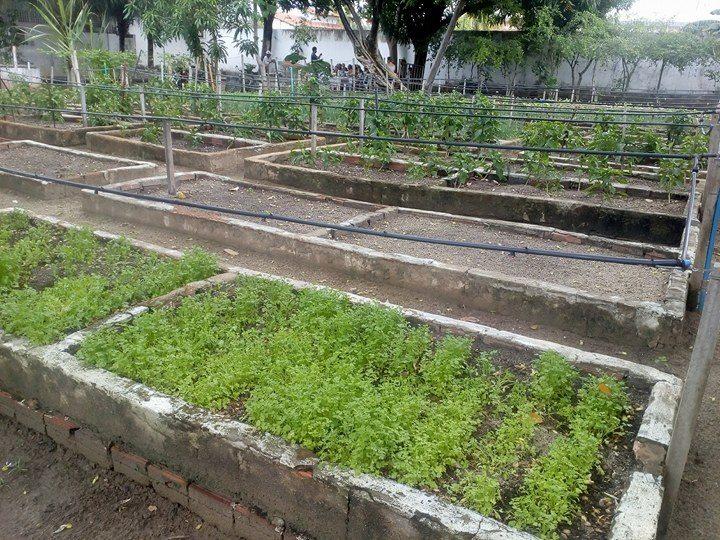 Amado Projeto Horta Comunitária nas Escolas: COPEMA mostra viabilidade  IY92